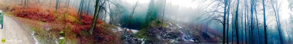 Wald panorama 123308 4