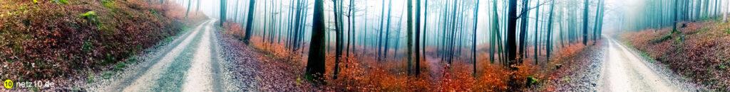 Wald panorama 123701 5