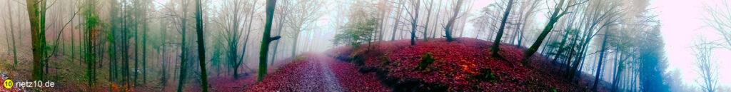 Wald panorama 124615 6