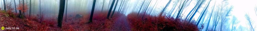 Wald panorama 124953 7