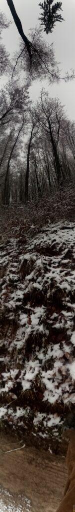 Wald panorama schnee 317 1
